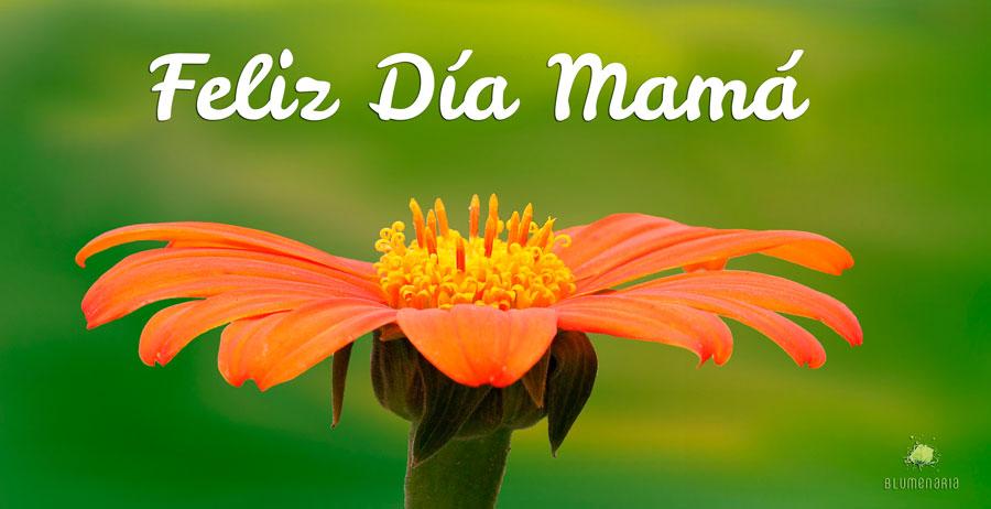 Feliz Día Madre 2018