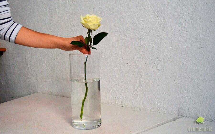 Flor en agua - Blumenaria Taller Floral
