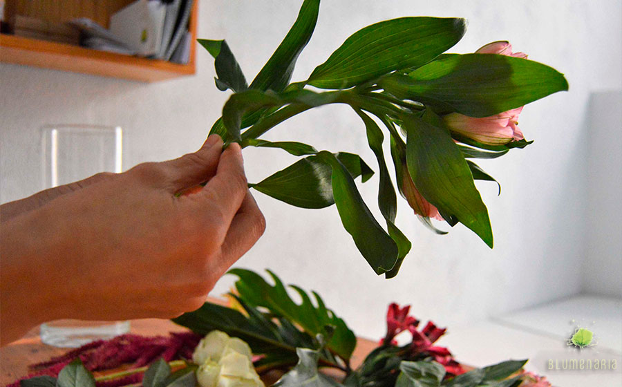 Limpieza Hojas - Blumenaria Taller Floral