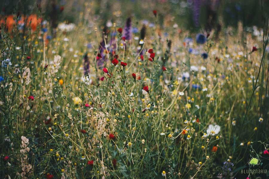 Pradera de Flores - Blumenaria Taller floral